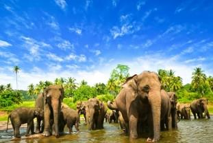 Šri Lanka od 999 € sa aerodromskim taksama